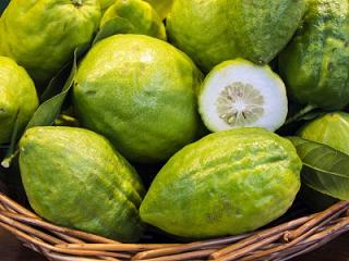 Cedro: Proprietà e Benefici