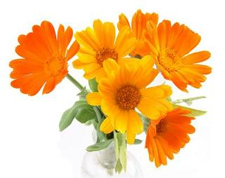 Calendula: Proprietà e benefici