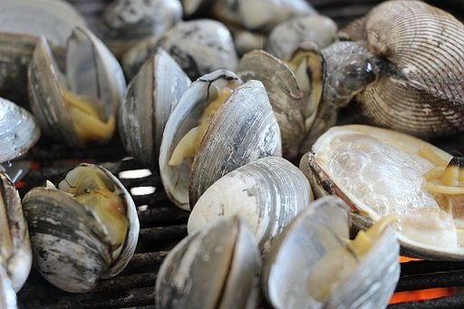 Vongole: proprietà e benefici