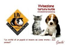 Photo of La Vivisezione