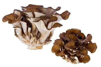 Maitake: proprietà e benefici