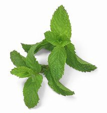 Roman mint: Properties and benefits