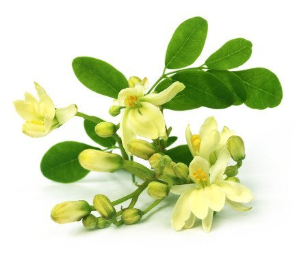 Moringa: Proprietà e Benefici
