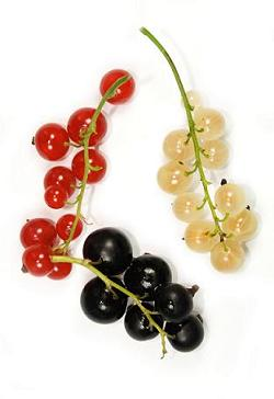 Currant: properties and benefits
