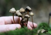 Photo of Funghi Allucinogeni